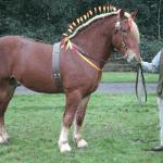 10 Rarest Horse Breeds Horse Nation