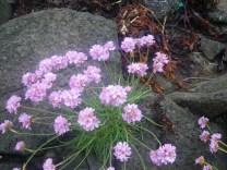 0620 6 Beach flowers