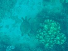 Wavelength 2 turtle