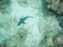 Wavelength 3 Parrotfish