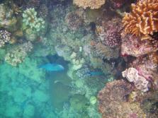 Wavelength 4 another parrotfish