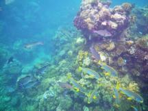 Wavelength 9 fish