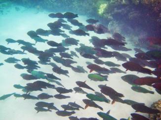 Wavelength 10 fish