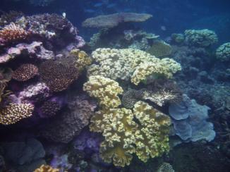 Cairns snorkeling 8 Coral garden