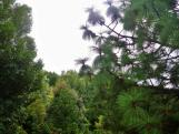 Eastwoodhill Arboretum 2