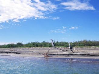 Ohiwa-Beach-4