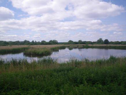 Surlingham-to-Chedgrave-1-marshes