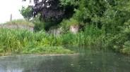 bure-river-10