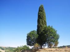 San-Quirico-to-Pienza-5