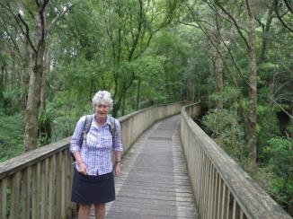 11-A-H-Reed-Kauri-Reserve