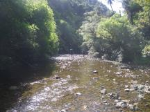 Omahuta-Forest-2