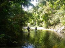 Omahuta-Forest-5