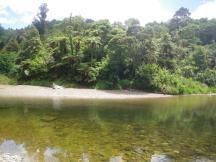 Omahuta-Forest-6