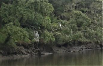 08-Tongaporutu-River-Spoonbill
