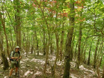 Kumano Kodo day 9 path to summit
