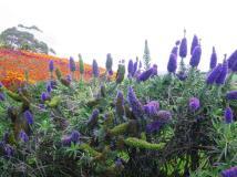 BoP 19 Kauri Point flower garden