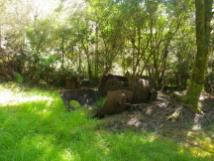 Charming Creek 3