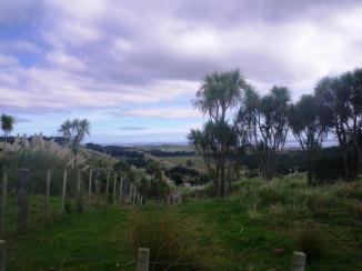 Mt Auckland 8 kaipara