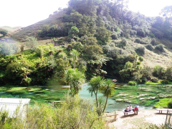 Waihau Spring 4