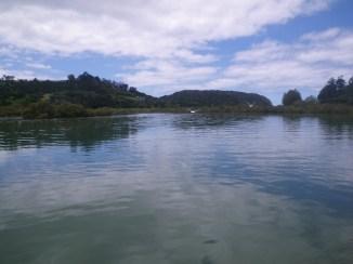 Waiwera Birds over water