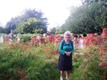 wpid-Brompton-cemetery-Autumn-ivy.jpg