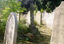 wpid-Brompton-cemetery-fox-2.jpg