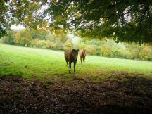 wpid-Chesham-circular-Horses.jpg