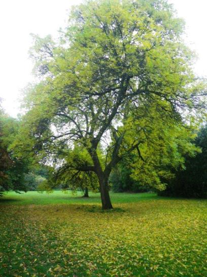 wpid-Pinn-River-Autumn-tree.jpg