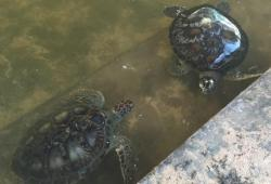 Puas Olahraga Air Di Tanjung Benoa, Saatnya Ke Pulau Penyu