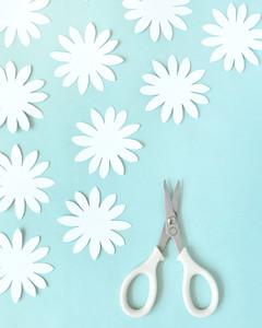 scissors paper daisies