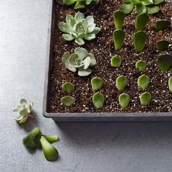 Container Garden Ideas Martha Stewart