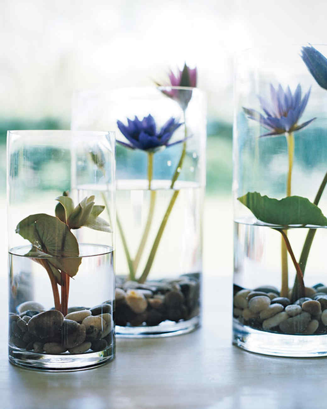 Lily Pond In A Vase Martha Stewart