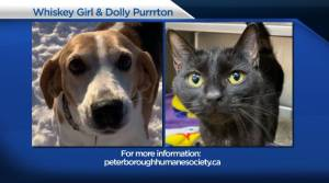 Global Peterborough's Shelter Pet Project for February 12, 2021 (02:15)
