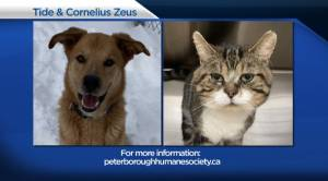 Global Peterborough's Shelter Pet Project for February 19, 2021 (02:54)