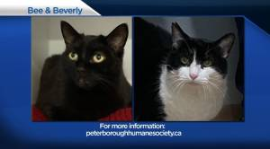 Global Peterborough's Shelter Pet Project for January 22, 2021 (01:51)