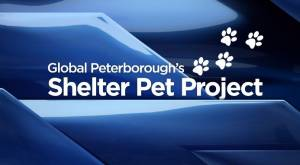 Global Peterborough's Shelter Pet Project for Nov. 20, 2020 (03:00)