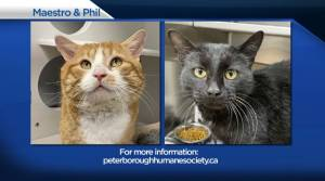 Global Peterborough's Shelter Pet Project for March 12, 2021 (02:42)