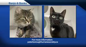 Global Peterborough's Shelter Pet Project for March 5, 2021 (02:33)