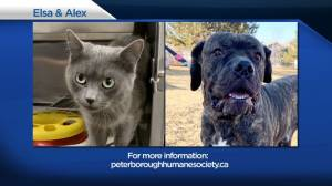 Global Peterborough's Shelter Pet Project for April 9, 2021 (02:35)