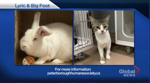 Global Peterborough's Shelter Pet Project for Oct. 23, 2020 (02:00)