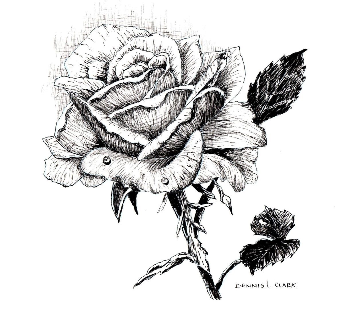 How To Draw A Rose In Pen And Ink