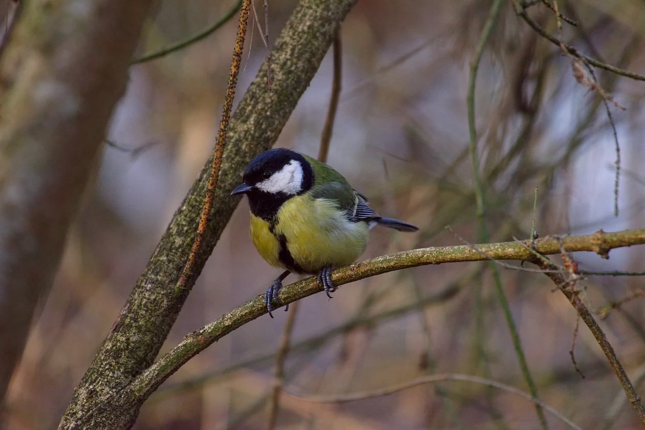 фотостудий в какую погоду лучше фотографировать птиц несколько недель кармен