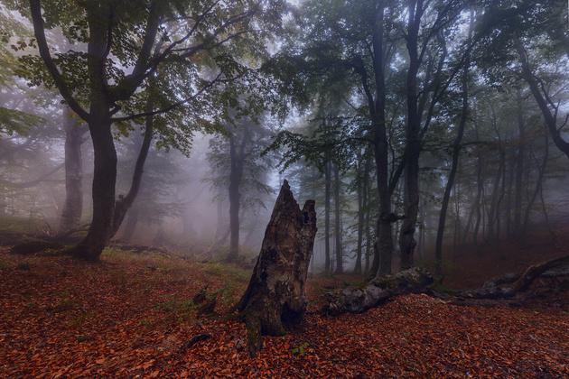 Nikon D810 / Nikon AF-S 18-35mm f/3.5-4.5G ED Nikkor Горный лес в «тумане», вызванном облаком, накрывшим склон горы.