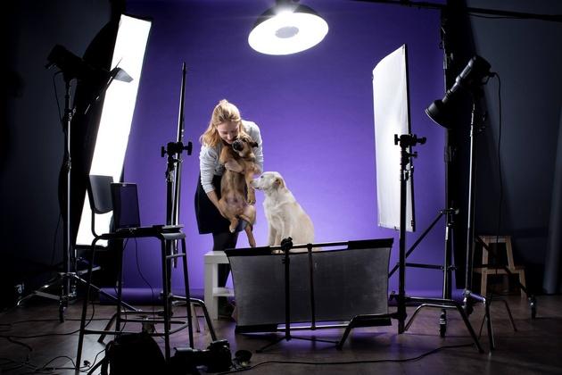 Как снимать животных в студии: практические советы