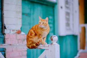 Изображение с ошибкой фокусировки. Мордочка кота размыта, а тело вполне резкое.