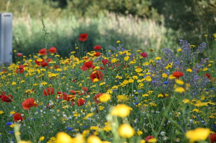 A close up of some of the colourful flowers.