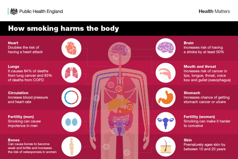 Infographic showing how smoking harms the body