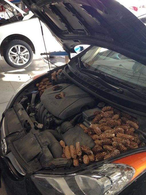 980x Photos That Prove That People Are Just The Worst With Cars. Random