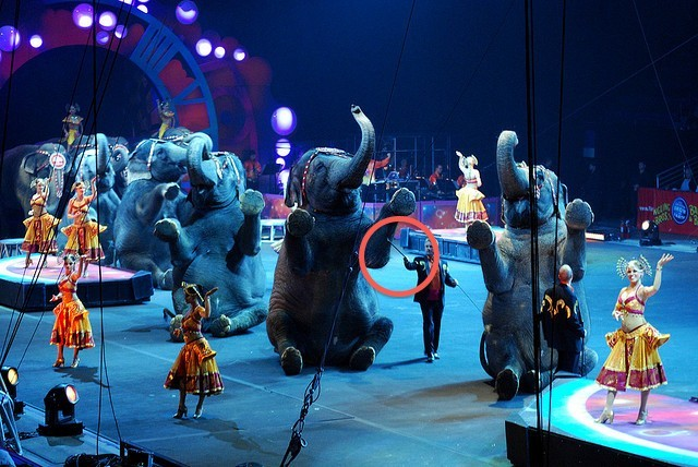 Image result for Elephants intelligent animal