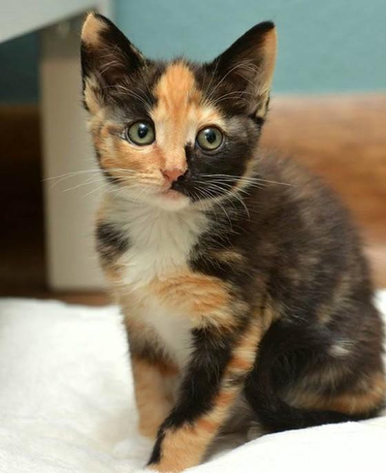 Kittens Adoption Near Me